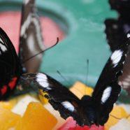 סדנאות מודעות והתפתחות אישית