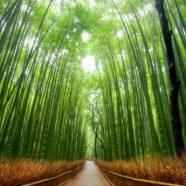 סיפור הבמבוק הסיני – משל לחשיבות ההתמדה בחיים