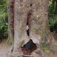 חיבור לעץ תודעתכם
